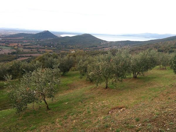 """Con """"L'Olivo e la Ginestra"""" escursione tra gli olivi di Casalini"""