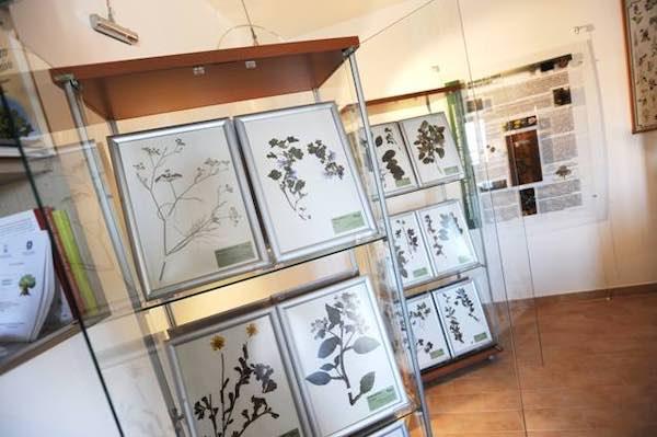Visita guidata al Museo Naturalistico e al Percorso Escursionistico