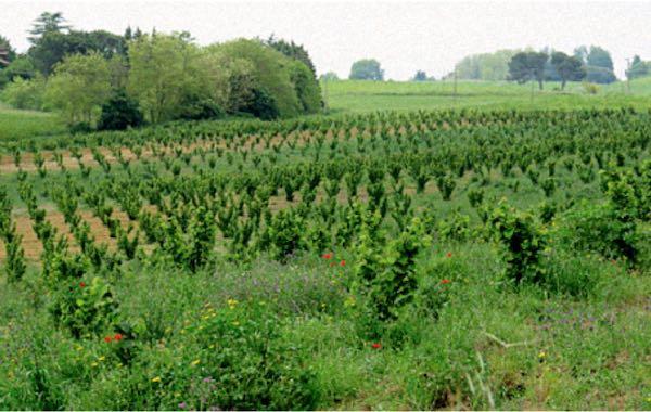"""""""Problematiche ambientali e sanitarie nella coltivazione intensiva di noccioleti"""""""