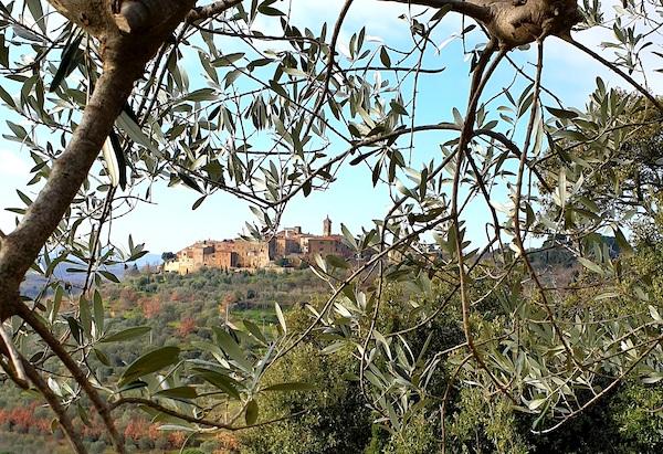 Decreto olivicultura, priorità agli oliveti iscritti nel registro dei Paesaggi Rurali Storici