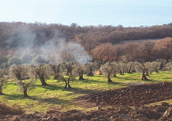 """Con """"L'Olivo e la Ginestra"""" escursione tra gli olivi di Piegaro"""