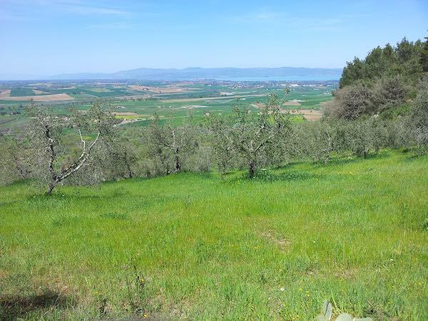 """Per """"Tramonti d'Estate"""", camminata tra gli olivi secolari"""