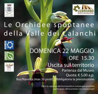 Domenica 22 Maggio a Lubriano uscita sul territorio alla scoperta delle Orchidee della Valle dei Calanchi