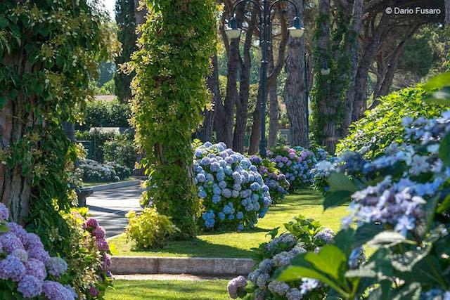 """""""Filosofia e arte dei giardini nella Tuscia"""". """"Riverberi"""" alla Festa delle Ortensie"""