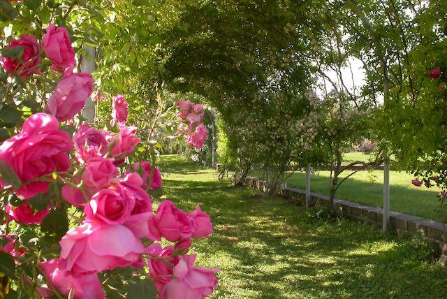 """""""Erborando"""" all'Orto Botanico, da marzo ad aprile"""