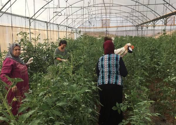 """Formatori della """"Quadrifoglio"""" in Palestina a sostegno di una cooperativa agricola tutta al femminile"""