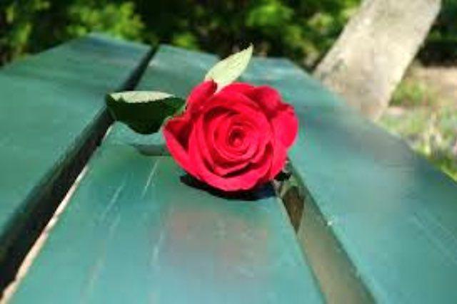 La rosa la spina