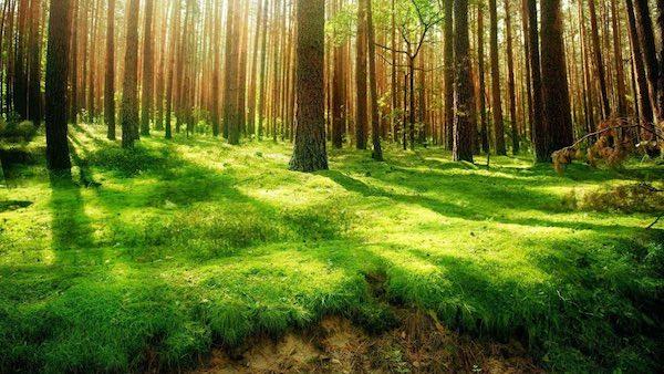 """""""Cultura del e nel Verde"""", tre giorni per rigenerare ..."""