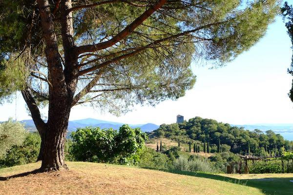 Escursione con degustazione finale di Fagiolina del Trasimeno, olio nuovo e vino