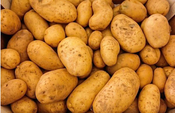 Partita la raccolta delle patate della Cooperativa Alto Viterbese