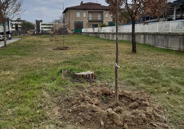 Il Comune pianta alberi di Paulownia per ogni bambino nato