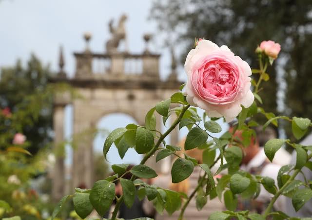 """Sboccia """"Perugia Flower Show"""". Winter Edition ai Giardini del Frontone"""