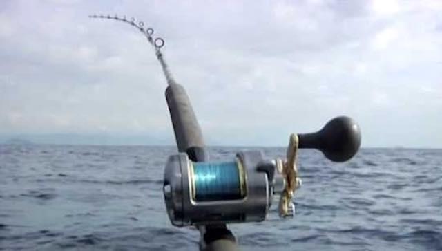 Pesca al coregone, avviato l'iter per riprendere la semina degli avannotti