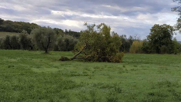 Abbattuti dal maltempo alberi e tralicci dell'elettricità