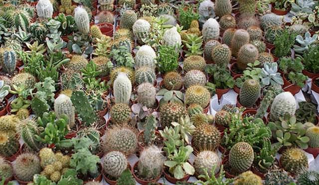 """Cactacee, succulente, piante rare e insolite ad """"Umbria e Cactus"""""""
