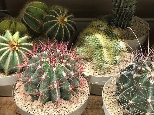 """Torna """"Umbria e Cactus"""". I vivaisti d'Europa alla Mostra Mercato di Piante Grasse"""