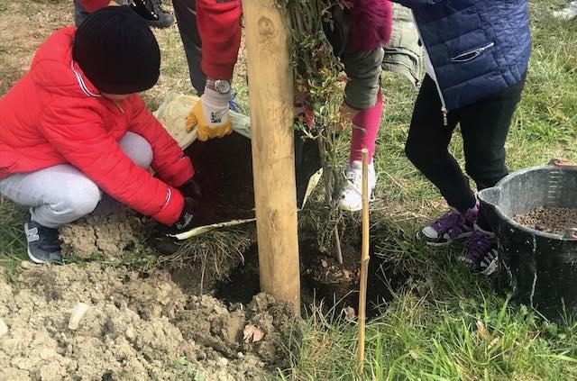 """A Sferracavallo i bambini piantano la Rosa """"Susanna Tamaro"""""""