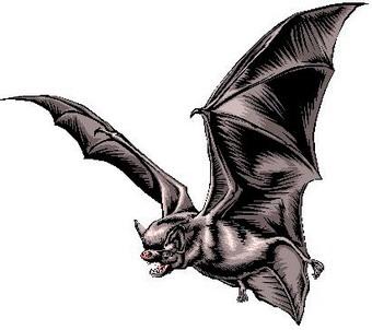 Domenica 25 settembre 2011 al Palazzo dei Sette c'è la European Bat Night
