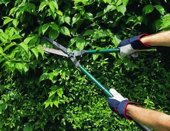 Manutenzione di terreni e giardini privati per evitare sanzioni