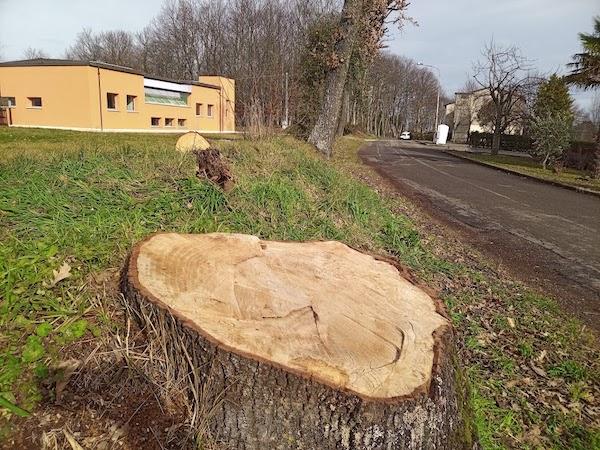 """""""Anche a Porano, purtroppo per gli alberi, è arrivata la primavera"""""""