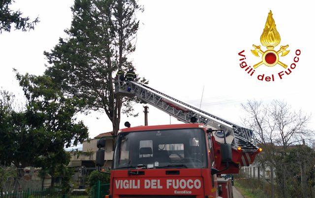 Maltempo Assisi, per il forte vento cade albero in via Umberto I