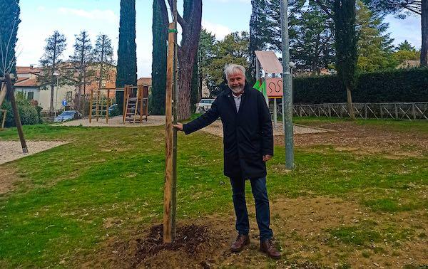 Giornata Nazionale degli Alberi, Città della Pieve mette a dimora tre platani