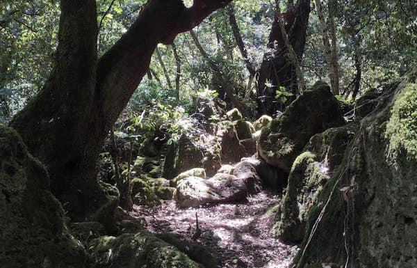 Riapre al pubblico il Bosco Monumentale del Sasseto. Visite tematiche su appuntamento
