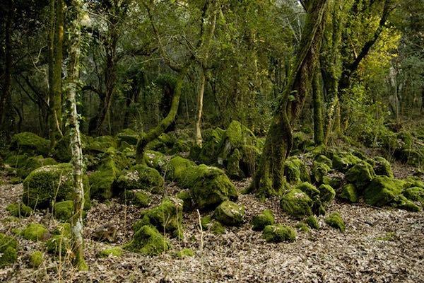 Escursione sull'Alfina, in boschi secolari su antichi vulcani
