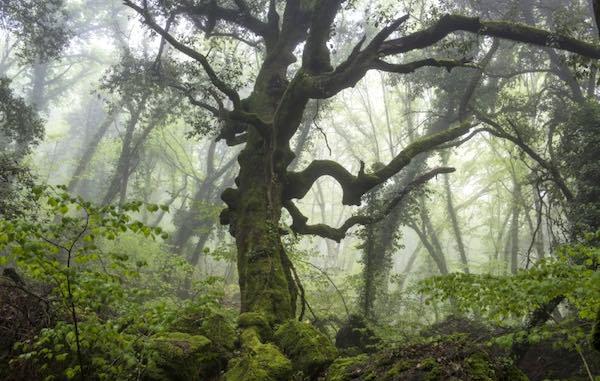 Nei boschi, monumentali o urbani. Tra gli alberi, per mettere radici nel futuro
