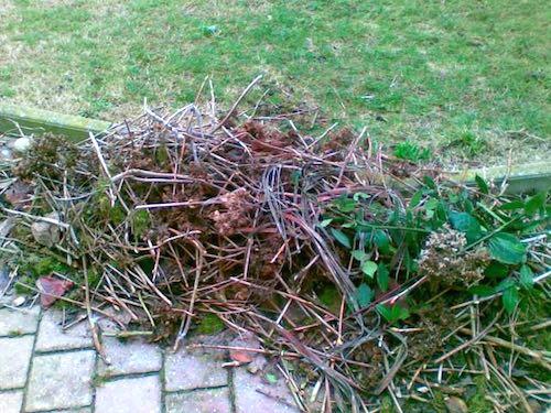Riprende la raccolta a domicilio degli sfalci d'erba