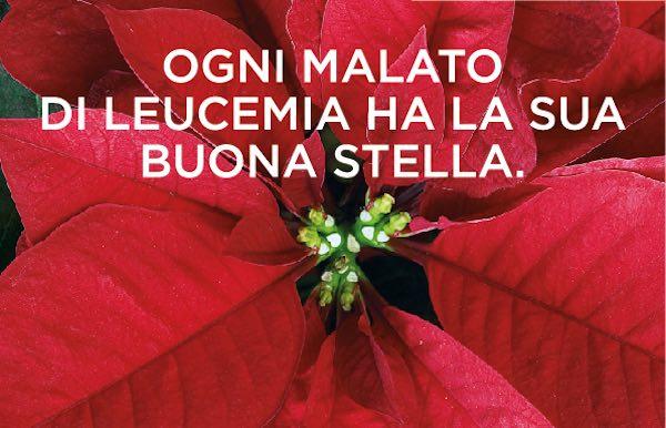 Tre giorni di solidarietà con le stelle di Natale dell'AIL