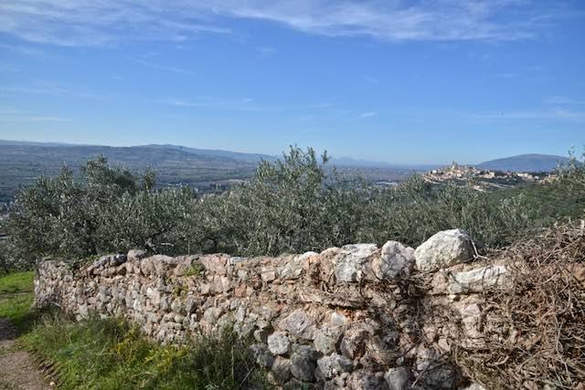 Strada dell'Olio Dop Umbria, tempo di bilanci e progetti mirati alla promozione territoriale