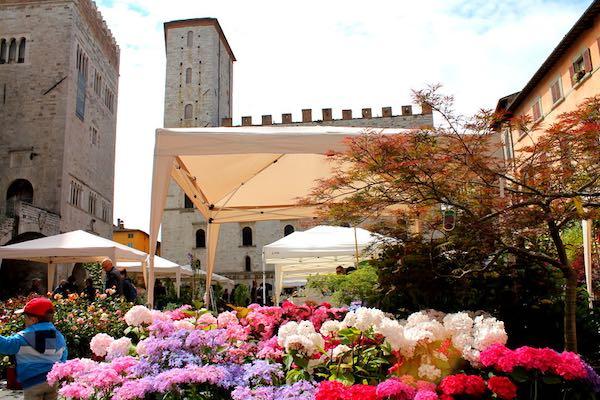 """Via a """"Todi Fiorita 2019"""". Tra florovivaismo specializzato e cultura dei giardini"""