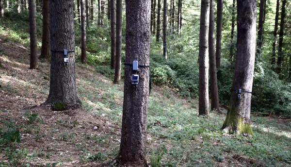 """""""Tree Talker"""", nel bosco degli alberi parlanti con """"Umbria Green Festival"""""""