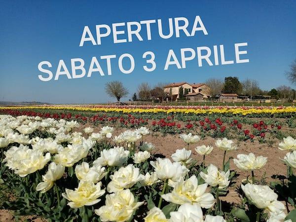 Tuscia Flower, apre al pubblico il campo con 300.000 tulipani olandesi