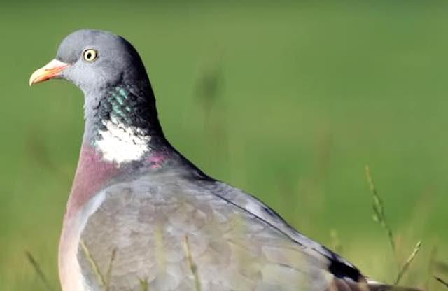 In un volume i risultati di 15 anni di monitoraggio sugli uccelli che nidificano in Umbria