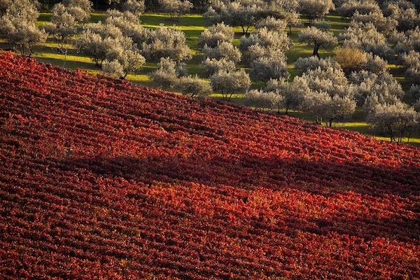 Turismo come volano dell'economia. Le Strade del Vino, dell'Olio e dei Sapori plaudono al Premier Draghi
