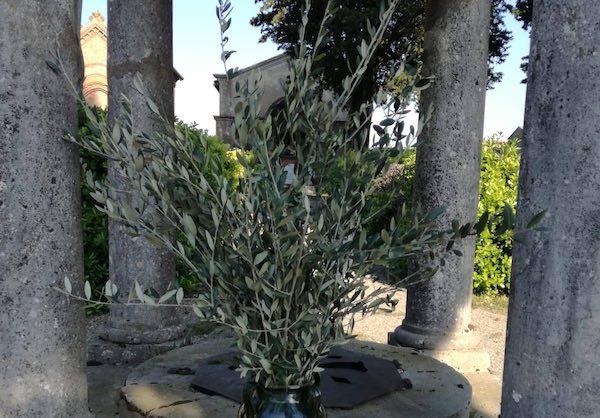 Rami di ulivo al Cimitero Comunale di Ficulle