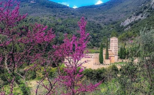 Spettacolo rosa nel cuore verde d'Italia. Fiorisce l'Albero di Giuda