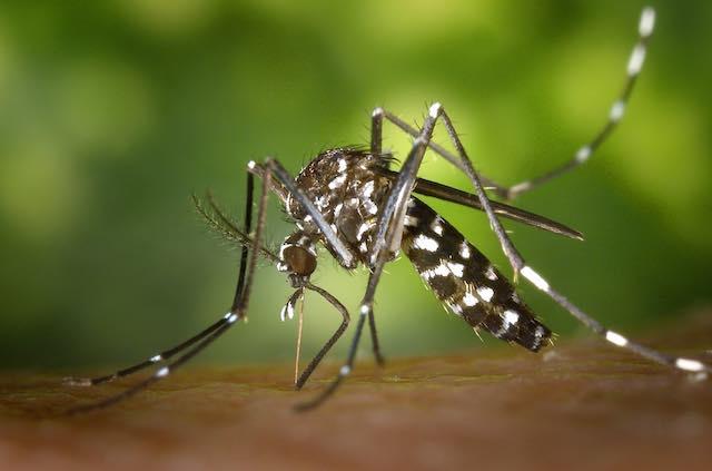 Misure preventive contro le zanzare, in vigore fino al 31 ottobre l'ordinanza